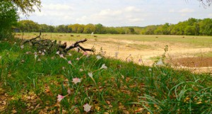 Jester King to Preserve 58 Acres of Land & Begin Farming