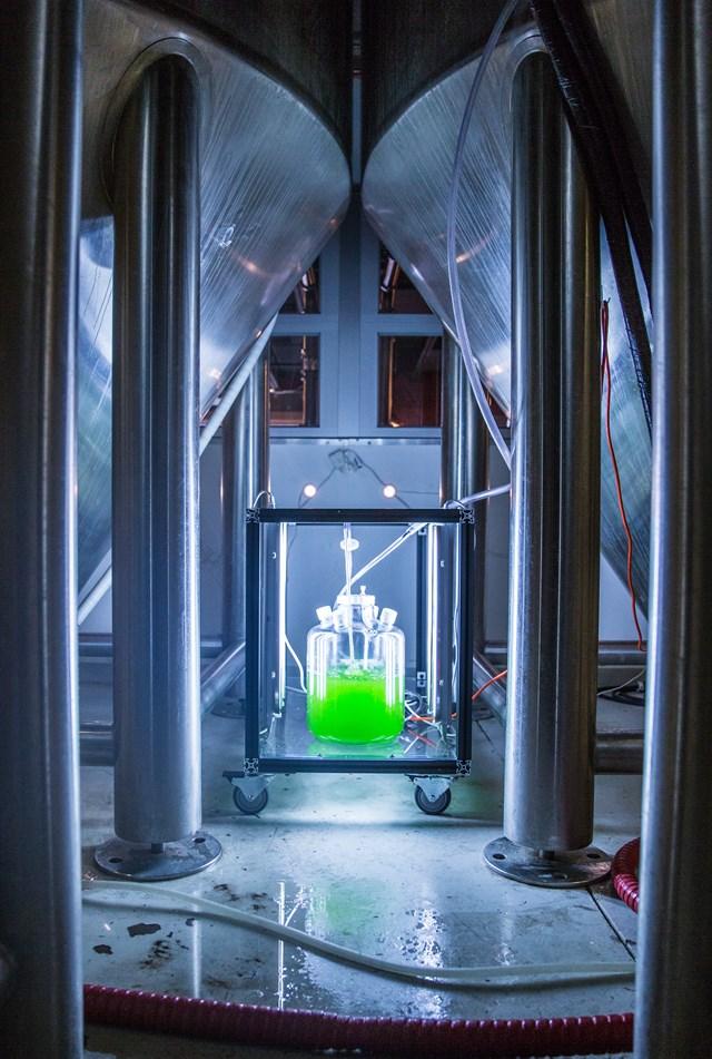 upslope-algae